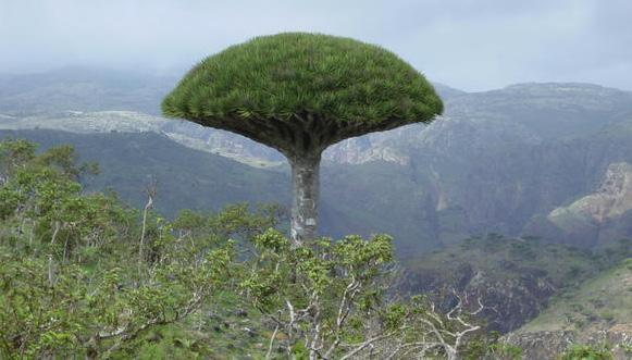 ميدل ايست مونيتور: الإمارات تسرق الأشجار المهددة بالانقراض من
