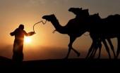 هل نجحت استراتيجية السياسة الخارجية الإماراتية؟!