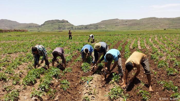 الإندبندنت: الغارات السعودية الإماراتية دمرت الزراعة في اليمن
